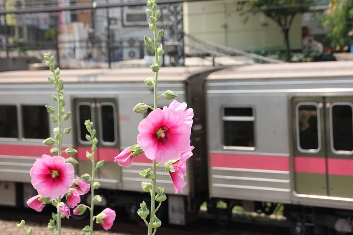 Rosa Blüten vor einem vorbeifahrenden Zug im Hintergrund