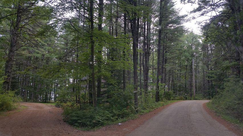 Zwei Abzweigungen eines Waldweges