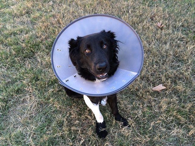 Hund mit Kratzschutz