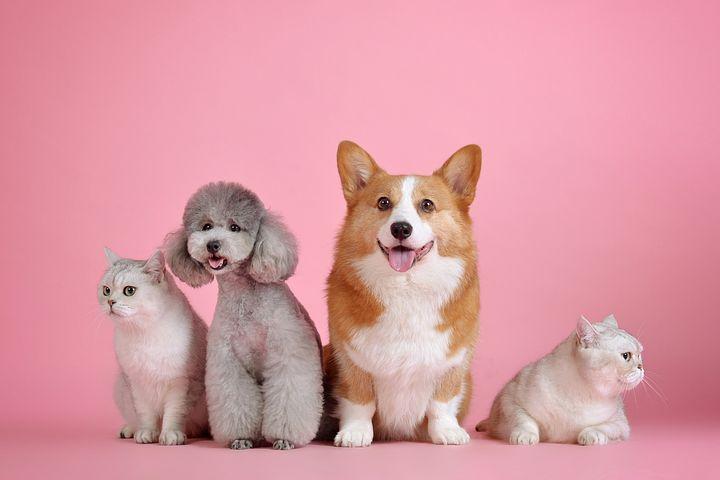 Zwei Hunde und zwei Kazten vor rosa Hintergrund